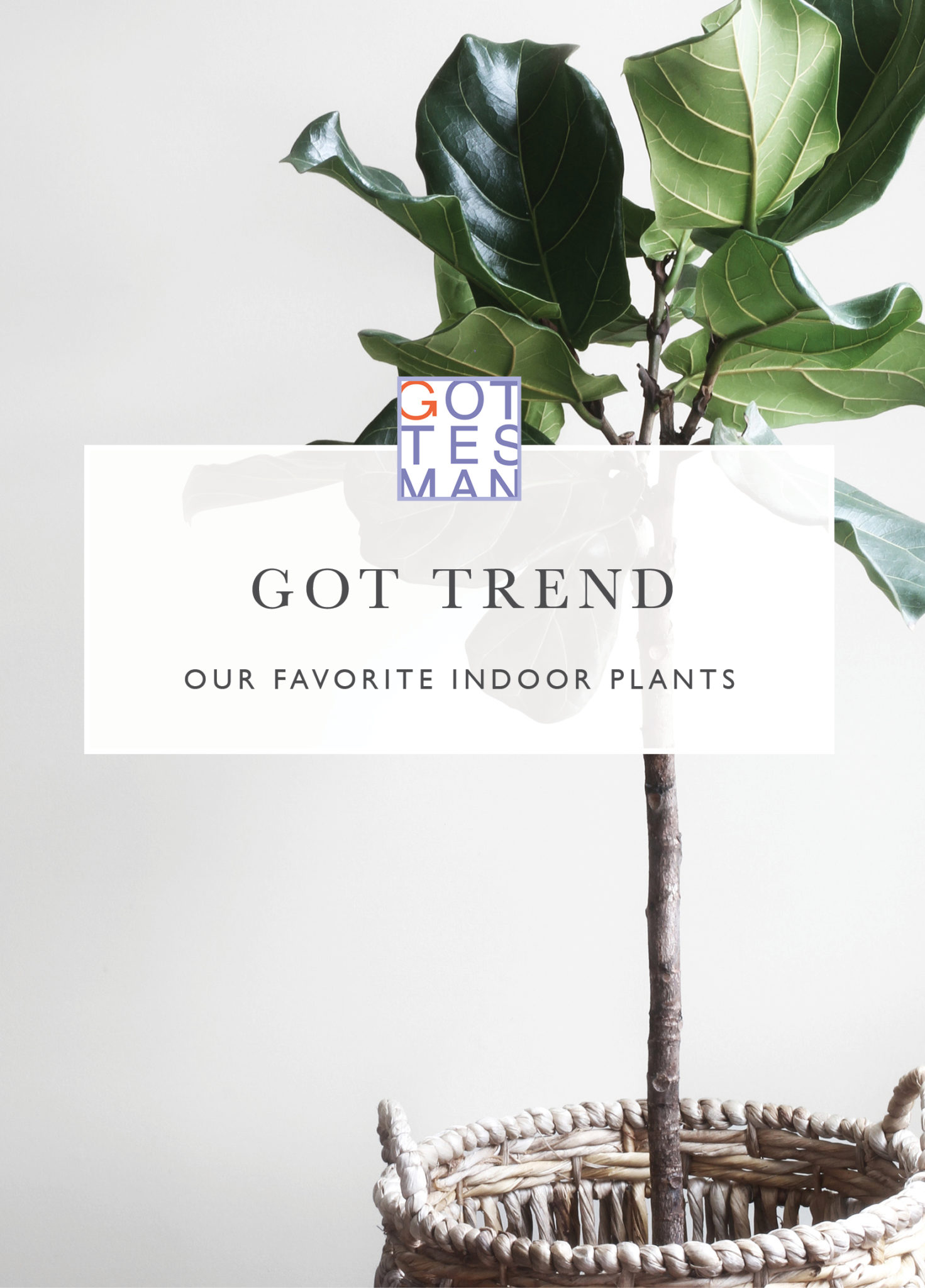 GOT TREND: Our Favorite Indoor Plants - Gottesman